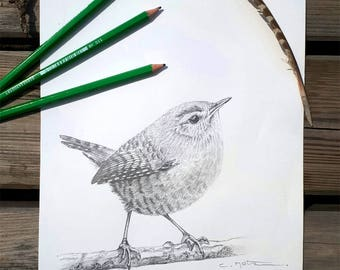 Bird illustration / Original bird drawing