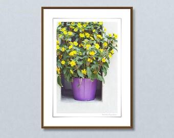 Original 24x32cm fine art photography, Sanvitalia giclee print, framed art prints, yellow flower wall art, home decor ideas, gift for her