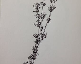 Thyme - original ink drawing