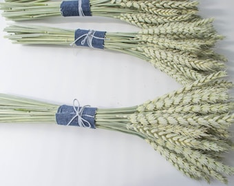 Dry spikelets, green spikelets, natural material, home decoration, wedding bouquet.