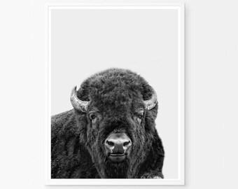 Bison, Buffalo Print, Bison Printable, Buffalo, Bison Photography, Bison Print, Southwestern decor, Printable decor, Printable boys room,