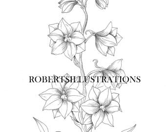 Birth Flower July, Larkspur Colouring Page
