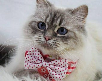 Bandana with attachable bow tie for Cats /Dogs