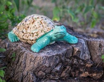 Curious Turtle - Medium