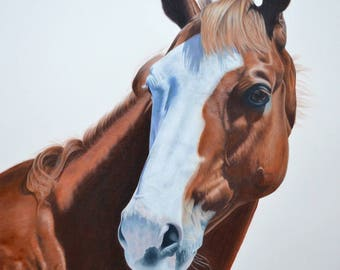 A4 Signed giclee print of horse portrait drawing in coloured pencils of Thoroughbred racehorse 'Apache Cat'