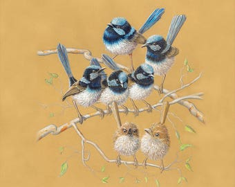 Blue Wren Family