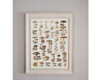 1908 Fungi/Mushroom Poster // Antique Nature Journal // Wall Art