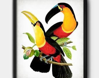 Toucans · Instant Download · Birds · Exotic · Vintage · Printable · Digital File #154