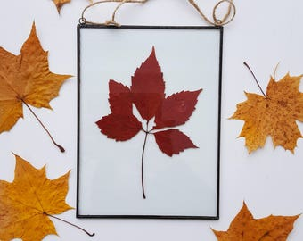 pressed leaves frame, Pressed plants suspended between glass, Double Sided Glass Frame, Gift for nature lovers