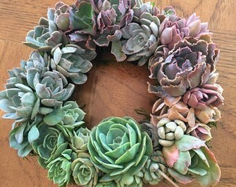 "8"" Succulent Rainbow Wreath"
