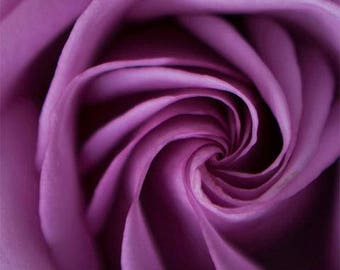 Purple Flower Wall Art, Roses Photography, Purple Roses Print, Picture Of Roses, Bunch Roses Picture, Colorful Flower Print, Purple Wall Art