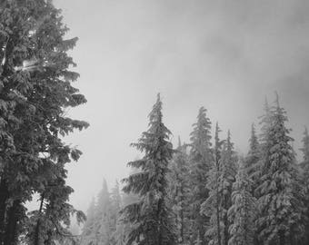 Snow Covered Trees | Crater Lake, Oregon | Fine Art Print