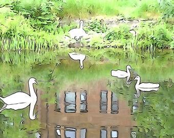 Tenement Swans