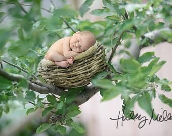 Newborn Digital Backdrop/Prop/Digital Background/Nest