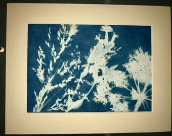 Natural Flower Riverbank Cyanotype Sunography