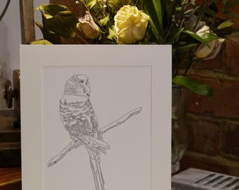 Original Art, budgie pen drawing mounted and signed, 10x8''