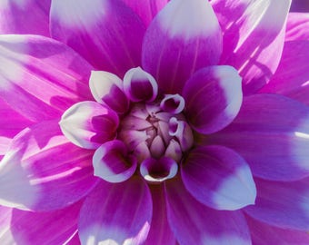 Digital Downloadable Art Photography Image