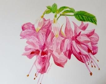 "Pink Fuchsia  ""Swingtime"". A4 Watercolour painting"