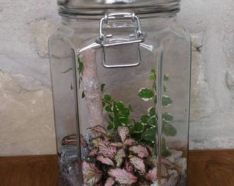 TROPICAL JAR PLANT TERRARIUM COVER FANCY RED AND CLEAR