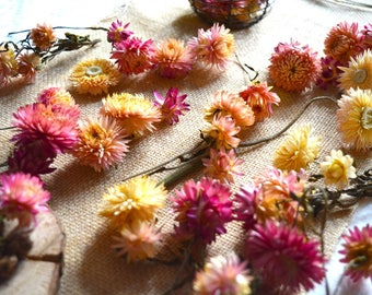 Flowers dried for decoration