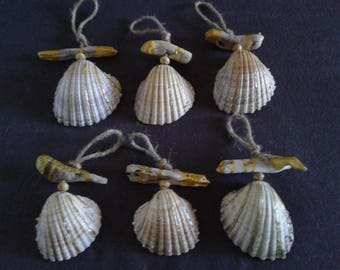 6 decorations, driftwood and shell