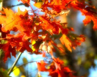 Fall leaves, Fine Art Photography, Nature Photography, Color Photography