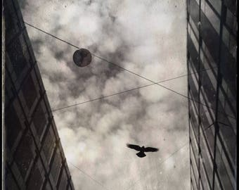 Raven in Flight