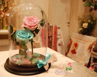 Enchanted rose special versions