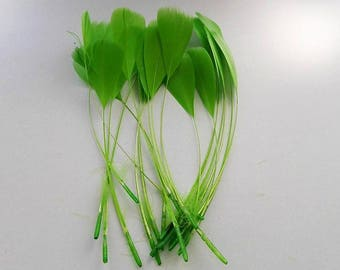 set of 10 feathers Green 15cm