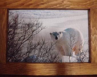 frame wood polar bear in snow