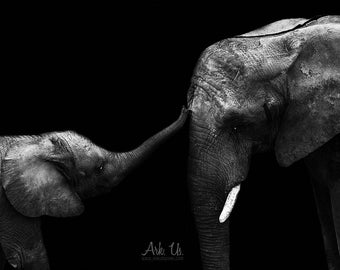 Poster portrait art tenderness of a baby elephant and her mother in black and white on black 20x30cm