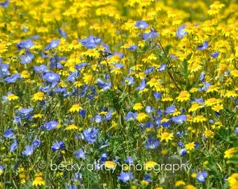 Blue and You | California Flower Art | Digital Print