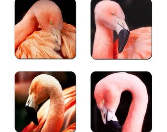 Set of 4 Flamingo drinks coasters featuring award winning photography by UniquePhotoArts.