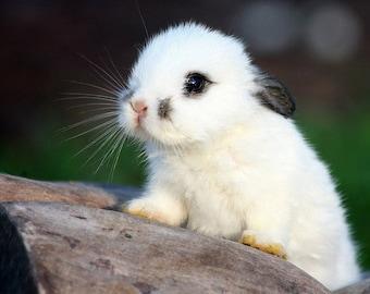 ORIGINAL design, durable and WASHABLE PLACEMAT - little white rabbit.