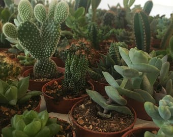 Cactus and Succulents