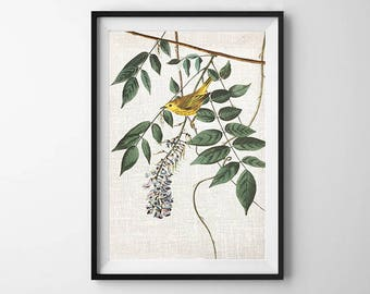 Audubon Bird Print, PRINTABLE ART, Wall Decor, Botanical Print, Bird art, Vintage Print, Poster, Nature artwork, Flower print, Botanical art