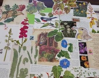 Nature Ephemera Collage Pack #2, 30+ pieces paper pack, Paper ephemera lot, junk journal pack, theme paper lot
