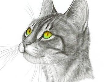 Tabby Kitten Original Graphite Portrait