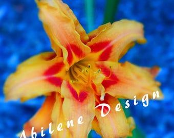 Floral Stock Photo, Mockup image, Printable Stock Photo Media Style image,  Yellow and Blue Mockup, Custom Scene, Flower Mock-ups