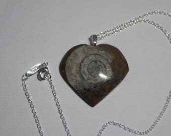 Fossil ammonite and silver pendant on chain