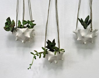 Tiny Conch Hanging Planter - White Modern Ceramic Indoor Planter Bowl Modern Planter Ceramic Pot