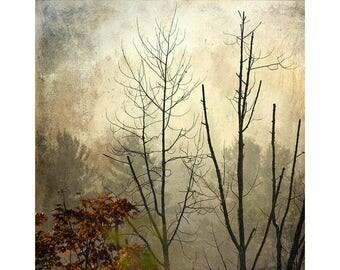 Abstract Landscape Art, Landscape Photography, Modern Art, Rustic Decor, Beige Brown Wall Art, Tree Photography, Winter