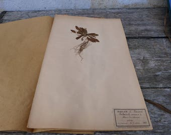 Antique-1887-1889-French-herbarium Souci du champs