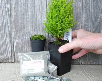 MINI Miniature Garden Kit for Indoors or Outdoors, Fairy Garden Kit, Mini Plants, Patio & Mix, Tiny Birdbath, Includes PDF and FREE Shipping