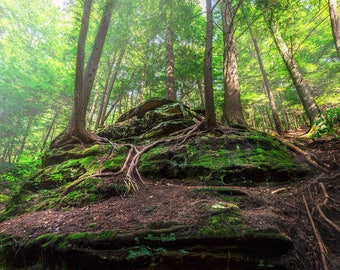 Hocking Hills Ohio Ethereal Landscape Photograph on Metallic Paper or Canvas