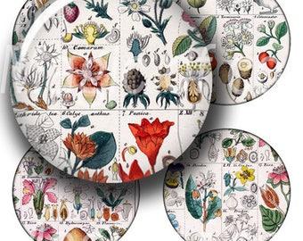 Botanical Table - 63  1 Inch Circle JPG images - Digital  Collage Sheet