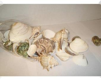 Shell Craft Pieces/Assorted/ Home Decor/ Supplies*