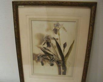 Vintage Iris Flower Print - George W. Case
