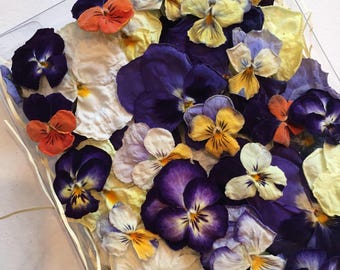 200 Violas and Pansies, Real Dried Flowers, Wedding, Table Decor, Centerpiece, Flower Girl, Dried Pansies, Craft Supplies, Cake Decorations