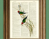 A Charm of Finches colorful birds illustration beautifully upcycled dictionary page book art print